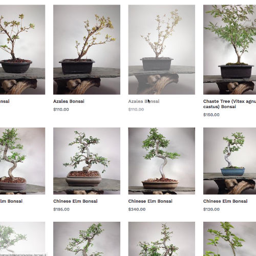A Bonsai Nursery Located In Ringoes Nj Allshapes Bonsai
