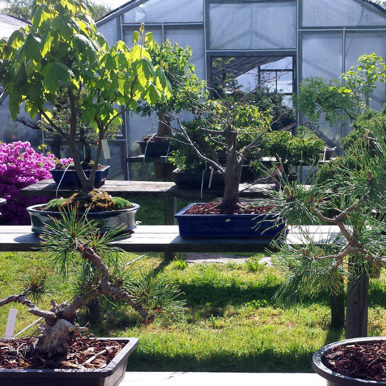 A Bonsai Nursery Located In Ringoes Nj